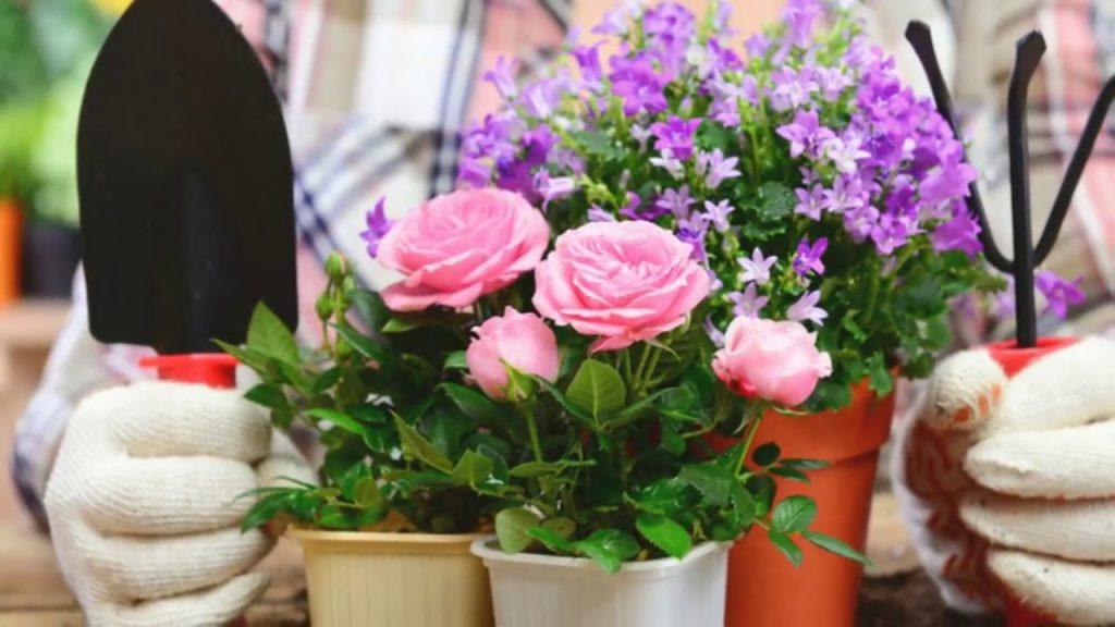 9 золотых правил по уходу комнатными за растениями