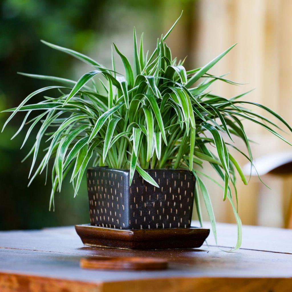 Топ-7 растений для очищения воздуха в помещении