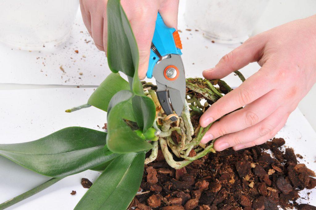 Правила выращивания орхидей в домашних условиях