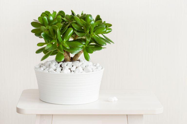 Топ-10 комнатных растений с положительной энергетикой