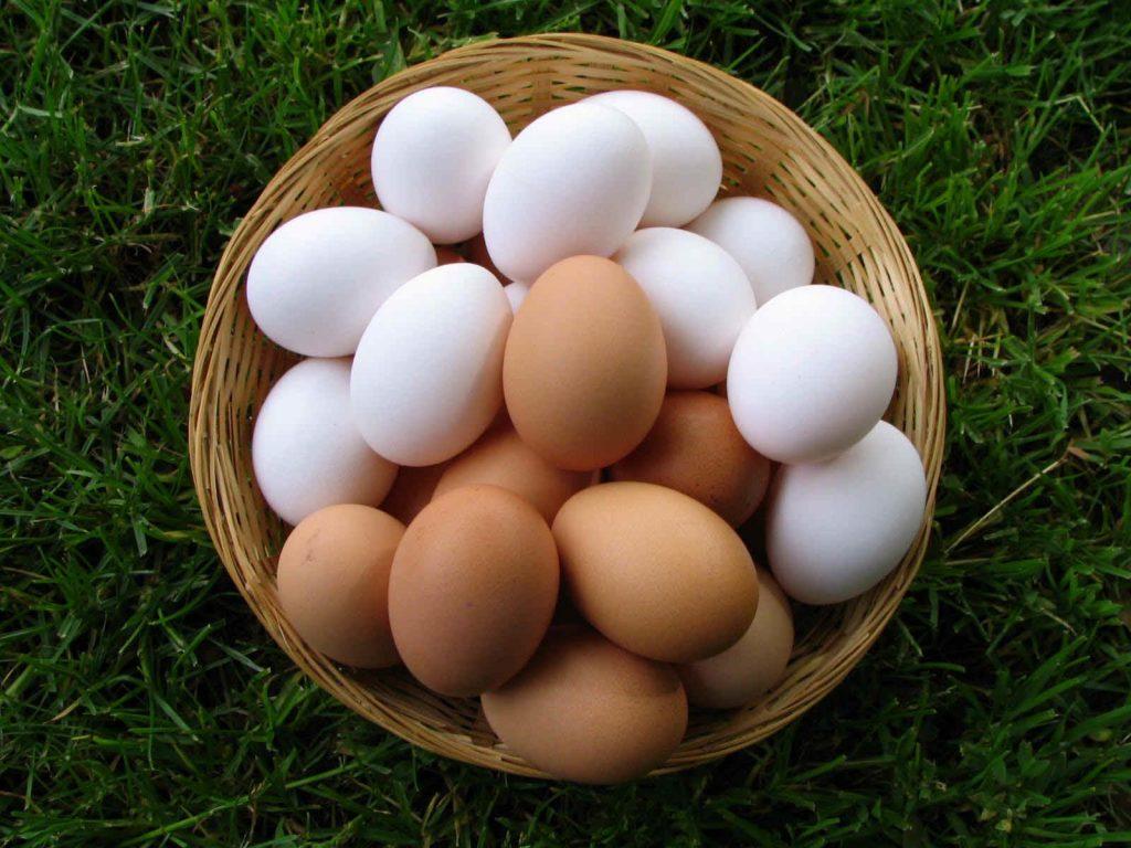 Чем отличаются коричневые яйца от белых?