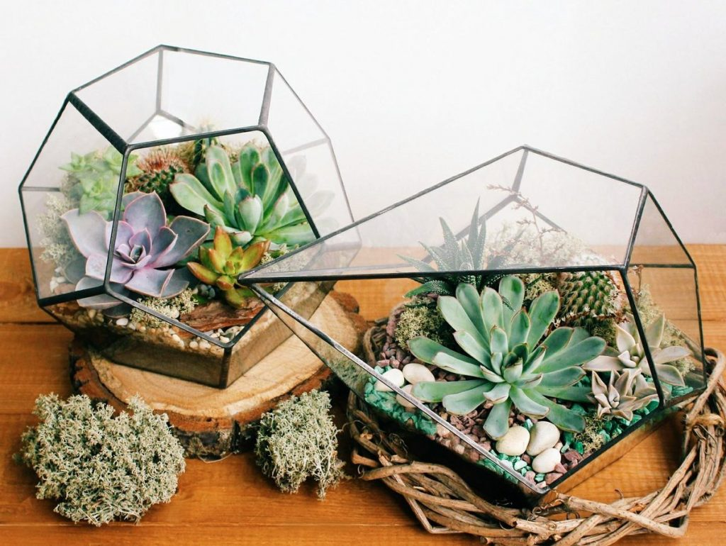Как сделать флорариум своими руками: подробная инструкция