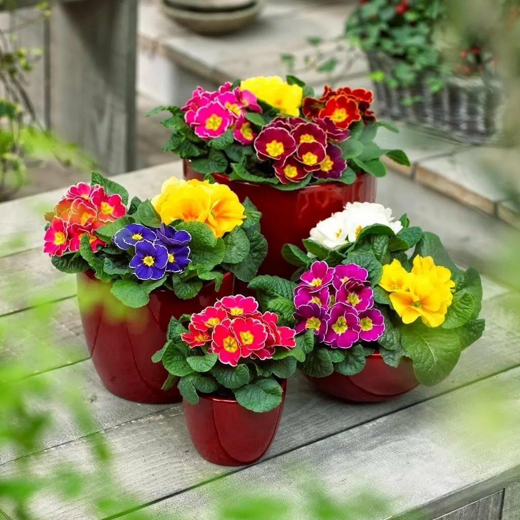 Как правильно выращивать цветы: три основных способа