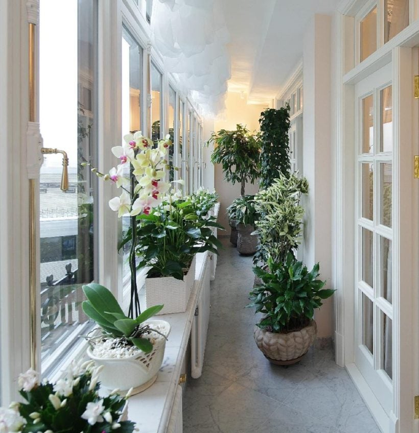 Озеленение балкона: что о нем нужно знать?